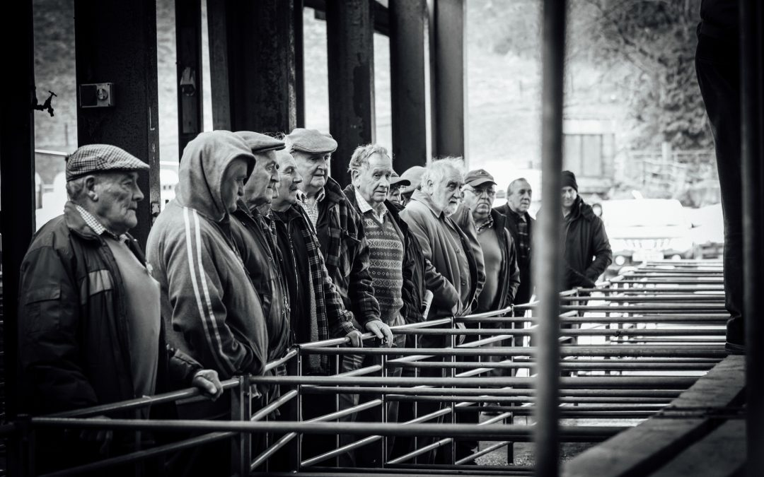 farmers at llanybydder livestock market selling sheep my rural tribe photography